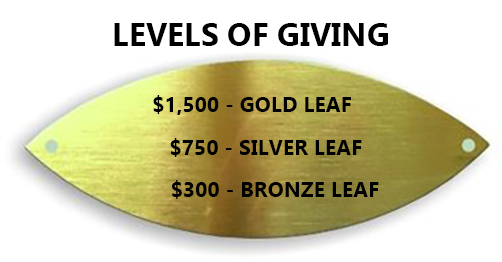 Leaf on the donor tree